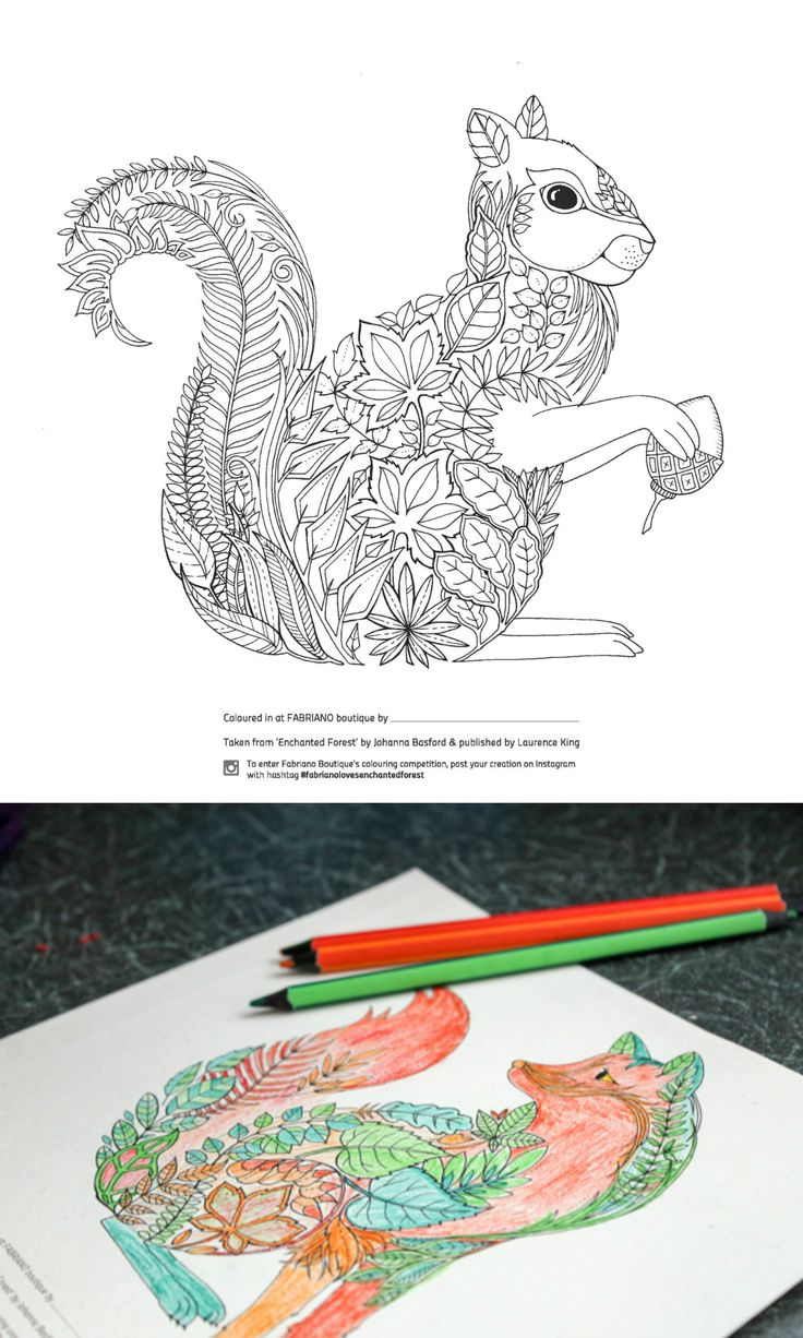 Grown up colouring pages, or advanced coloring pages for adults. Free printable from Enchanted Forest by Johanna Basford. Cute squirrel design