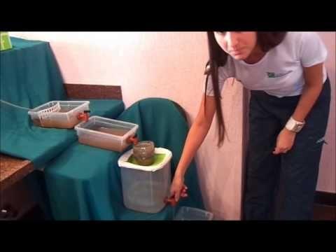 Tratamento de Esgoto - colégio Bernoulli - YouTube