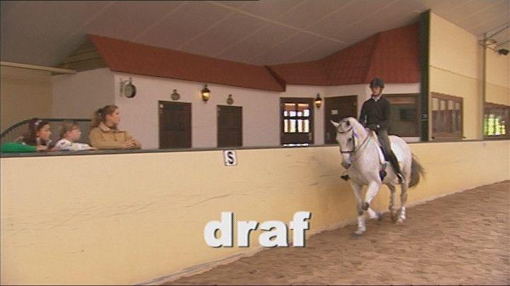 """Het lopen van een paard wordt de """"gang"""" genoemd. De drie meest bekende gangen zijn: stap, draf en galop."""