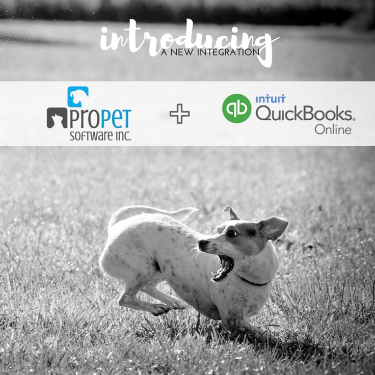 A match made in doggy heaven 🐶 We are excited to introduce our newest integration with QuickBooks Online!  Take a test drive of ProPet to try it out!