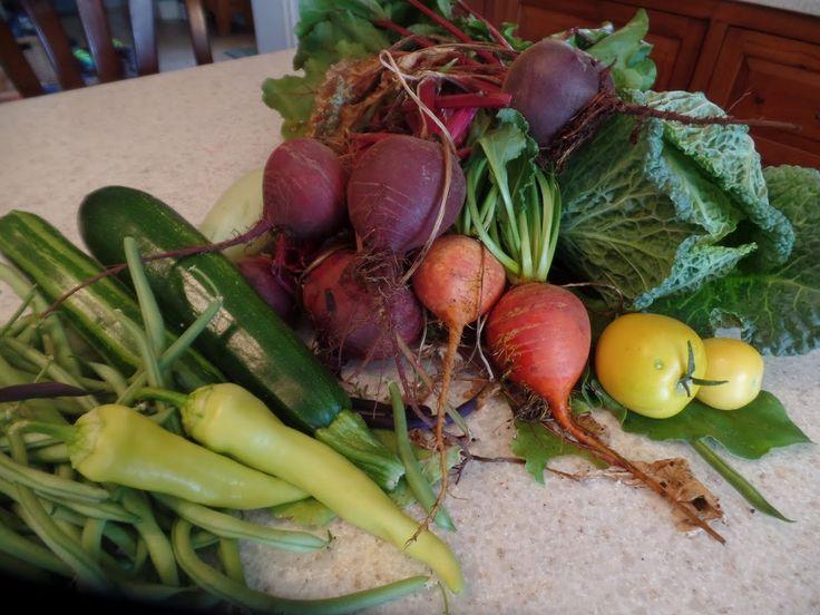 Growing Organic : Best Organic Gardening Tip To Build Your Soil