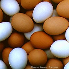 EAT IT! Eggs 101. 1 soft egg daily for numerous health benefits.