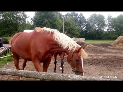 Wild horses - Divocí koně