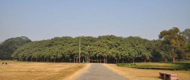 Un singur copac