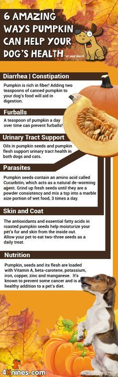 ♥ Dog Care Tips ♥ It's pumpkin season! Do you know that pumpkin is a wonderful healthy treat for dogs? Find out the amazing health benefits pumpkin has on dogs (and cats too)!
