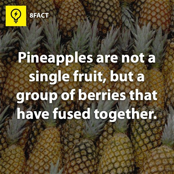 Nothing to do with PINE trees or APPLES ‼️