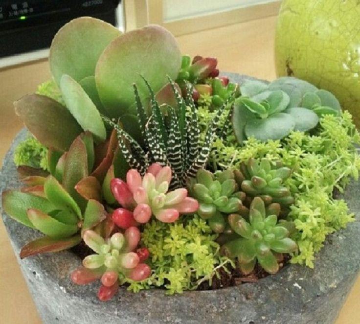 C mo combinar suculentas en el mismo recipiente blog and - Composiciones de cactus ...