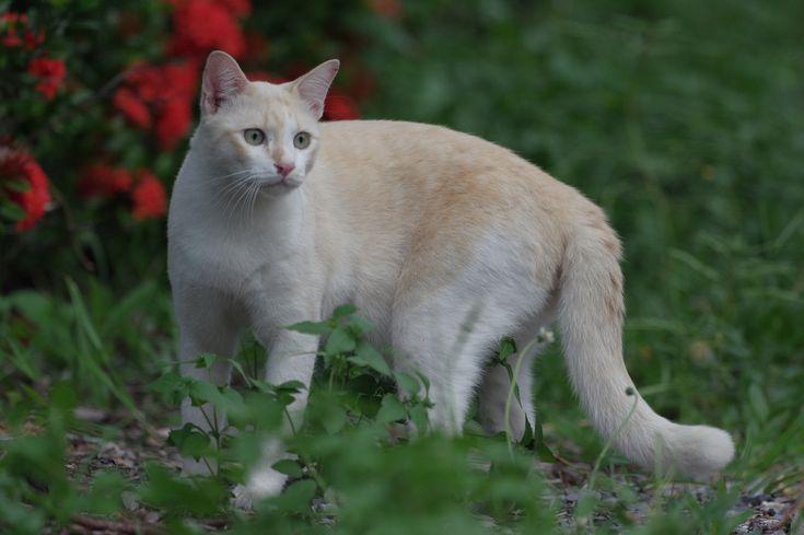 ถ งผมจะเป นแมวท มารยาทเส ย แต ท กคนท ผ านมาก มองผมน าร ก และมาจ บผม ผมก ก ดจนเล อดออก ก ดหมดอ ะ ในบ านเลยไม ม ใครอยากย งก บนายแล ว และผมกำล งจะตกกระป องเพร
