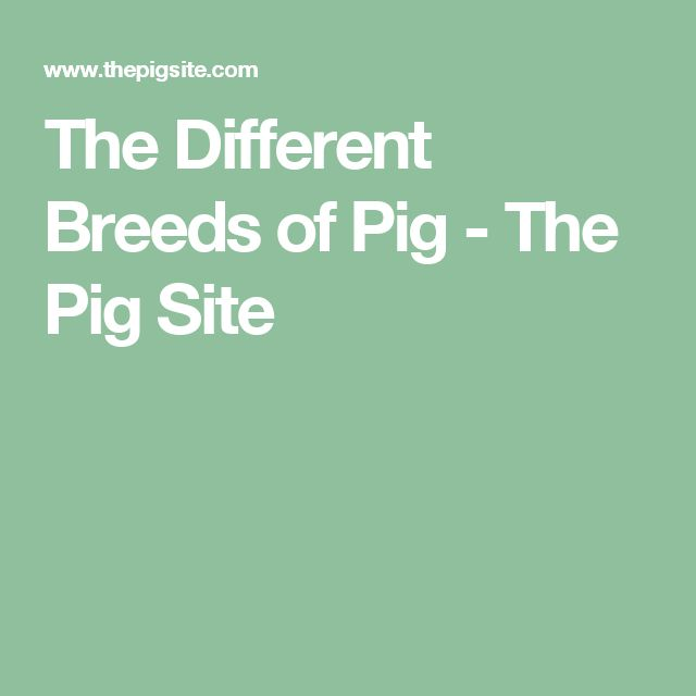 The Different Breeds of Pig - The Pig Site