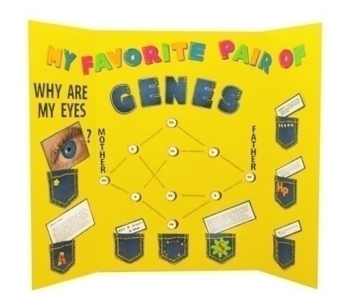 Make a Science Fair Poster | DNA Project | Eyes  Genes Poster Ideas
