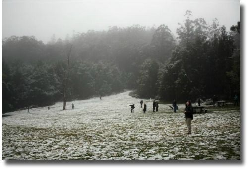 #patchholidayfun  Would love to play in the Snow in the Yarra Ranges National Park, Victoria, August winter wonderland