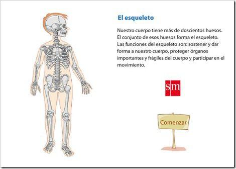 Principales huesos