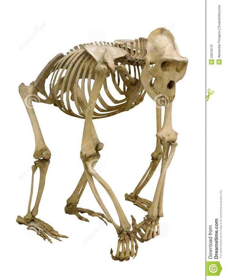 19 best Anatomy images on Pinterest | Anatomy models, Human anatomy ...