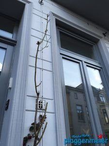 Hausfassade Streichen Wie Oft 337 besten fassadengestaltung bilder auf bremen