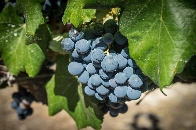 Wrzesień to czas, kiedy za oknem coraz mniej słońca, a pogoda nie zawsze dopisuje. O ile w lato większość z nas preferuje delikatne białe wina typu prosseco czy chardonnay, o tyle z początkiem jesieni coraz częściej sięgamy po kieliszek wina czerwonego.