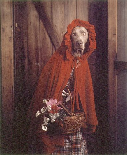 "William Wegman- ""Grandmother,"" she said, ""you look…"" from Little Red Riding Hood suite"