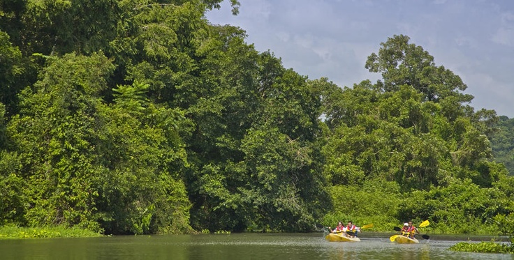 Kayaking on the Panama Canal, Gatun Lake and Chagres River at the Gamboa Rainforest Resort