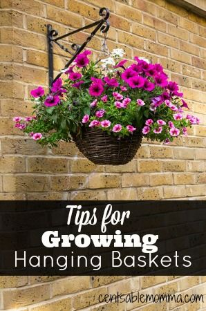 Check out these tips for growing a hanging basket to help you have a beautiful basket this summer!