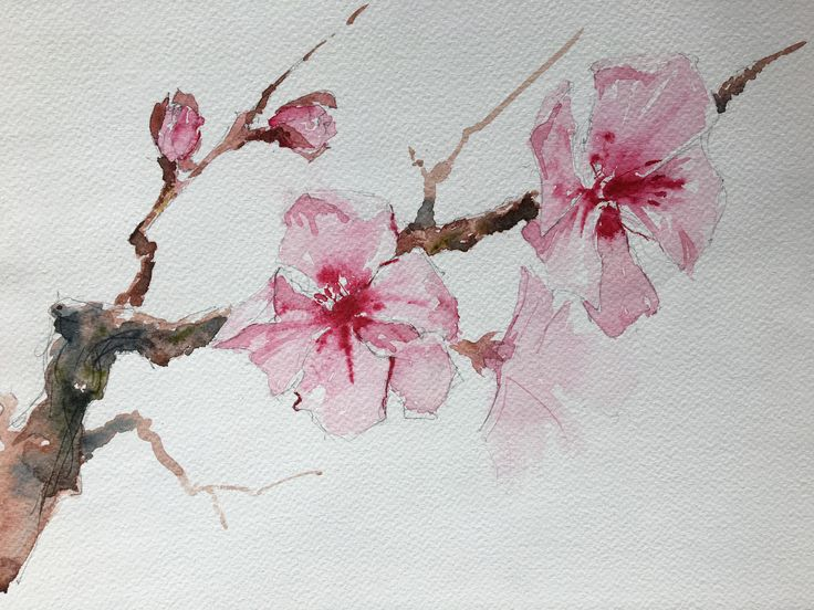 Peach Flower. Watercolor.