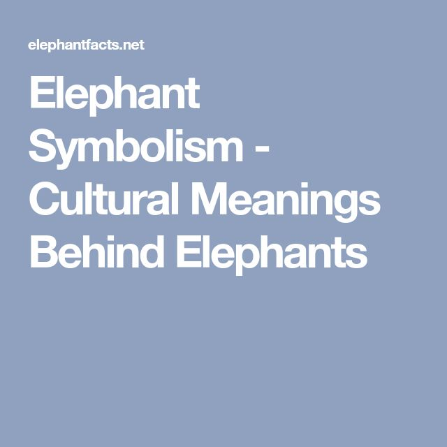 Elephant Symbolism - Cultural Meanings Behind Elephants