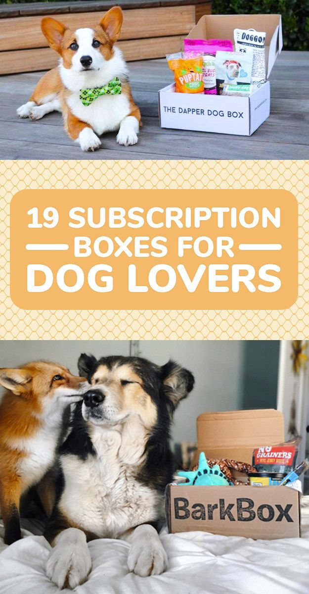 Subscription Boxes For People Who Love Their Dog More Than Life Itself
