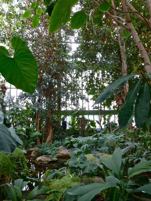 17 meilleures images propos de v randas et plantes sur pinterest jardins serres et tropical. Black Bedroom Furniture Sets. Home Design Ideas