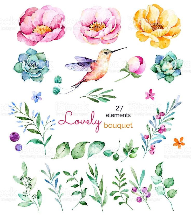 Foral collection with flowers,roses,leaves,branches,berries,succulents royalty-free stock vector art