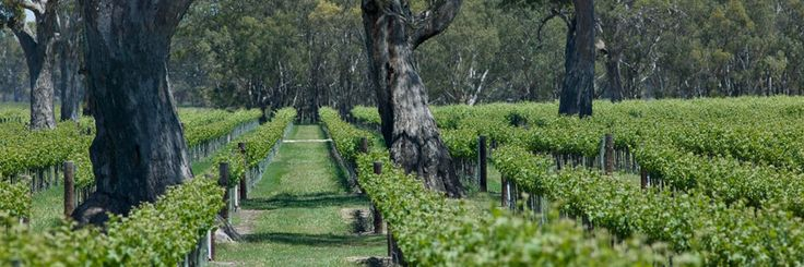 Padthaway Wine region in South Australia's Limestone Coast is celebrating 50 years of grape growing (1964 to 2014) https://cms.connectbroadcast.com/blog/2002