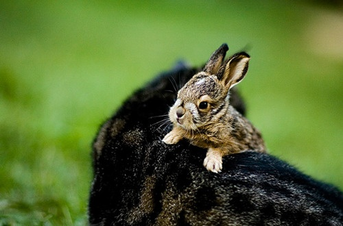 splodefromcute:: Animal Pics, Baby Bunnies, Liv Friends, Halloween Things, Baby Animal, Baby Things, Sweet Friends, Animal Chevaux, Animal Pals