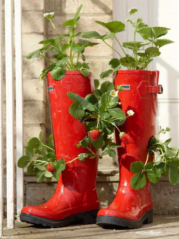Any old boots will do, but Red Rubber Boots Planter with Strawberries Plants really look good.