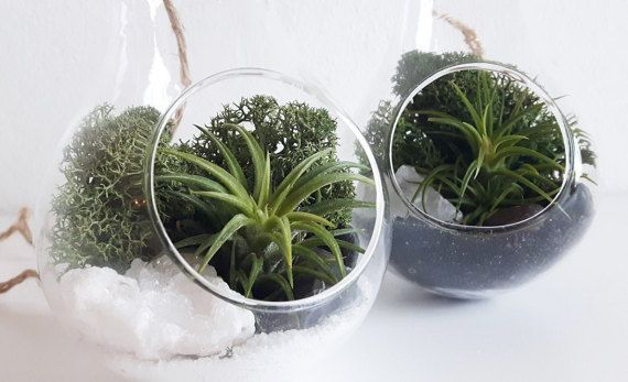 Black & white light bulb terrarium kit with air by AlvinaDecco