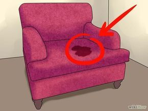 Imagen titulada Remove the Smell of Cat or Dog Urine from Upholstery Step 1