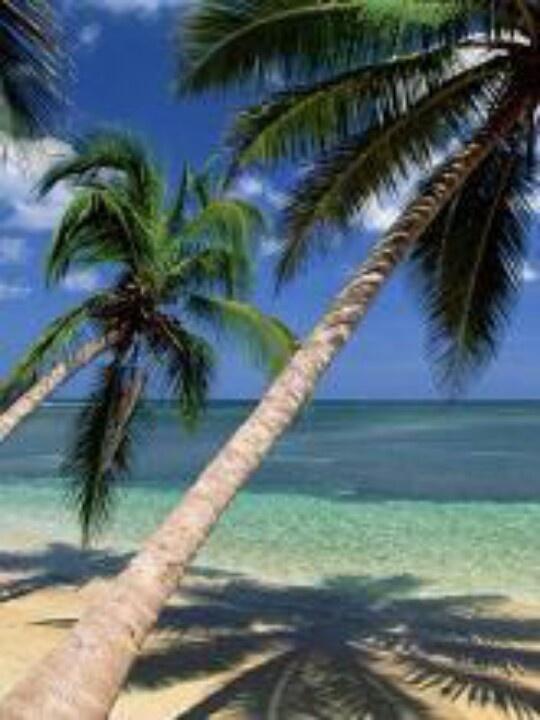 Leather Passport Case - Palm Trees and Beach Fun by VIDA VIDA 7NPnP