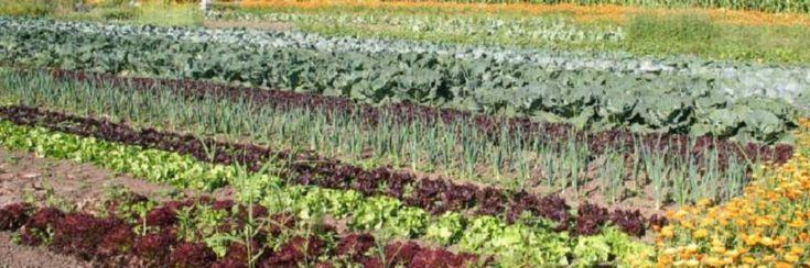 Kunnen 10 miljard mensen gevoed worden door biologische landbouw?