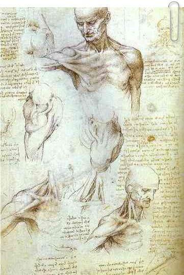 The Neck and Shoulder of a Man by Leonardo da Vinci