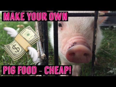 Mini Pig / Pot Belly Pig make your food - Save Money! DIY Potbellied pig - YouTube