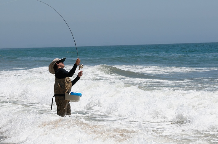 68 best california surf fishing images on pinterest for Shark fishing gear for beach