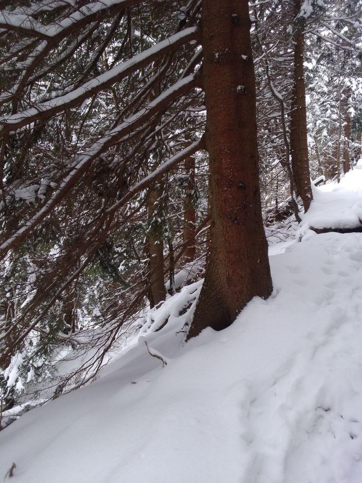 Winter /zima