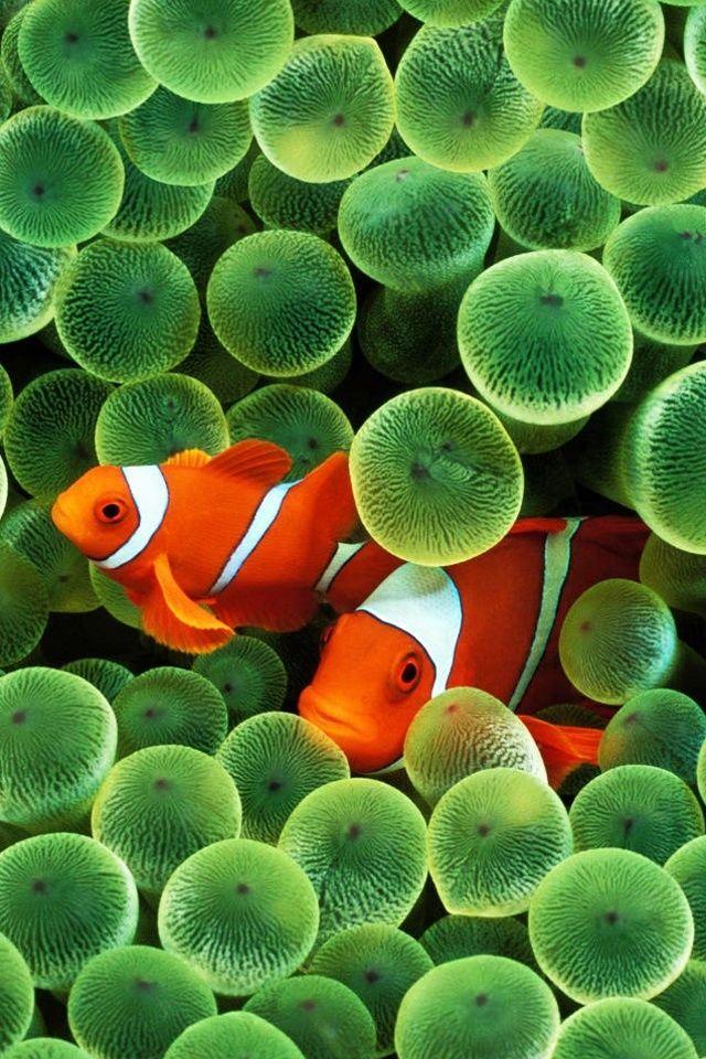 ¿Qué animales acuáticos te parecen más simpáticos? Descubre algunos de los más divertidos en: http://www.aquaservice.com/informacion/que-animales-acuaticos-te-parecen-mas-simpaticos/