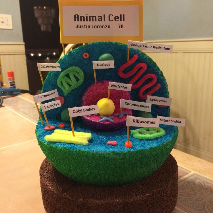 7th Grade Animal Cell 3d Project (With Images)