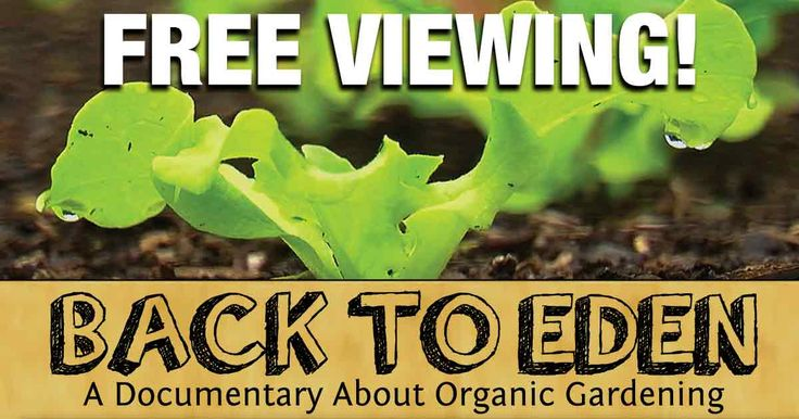 Back to Eden reveals a simple organic gardening method that can not only transform your personal garden, but may even be the solution needed on a global scale. http://articles.mercola.com/sites/articles/archive/2017/04/22/back-to-eden-organic-gardening.aspx?utm_source=dnl&utm_medium=email&utm_content=art1&utm_campaign=20170422Z1_UCM&et_cid=DM140660&et_rid=1978867688