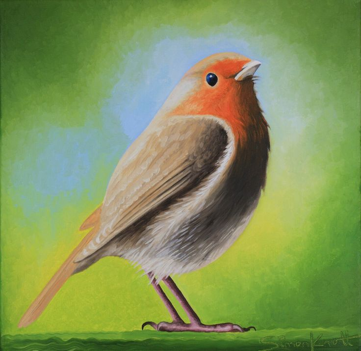 Robin #artist British birds uk oil painting by Simon Knott