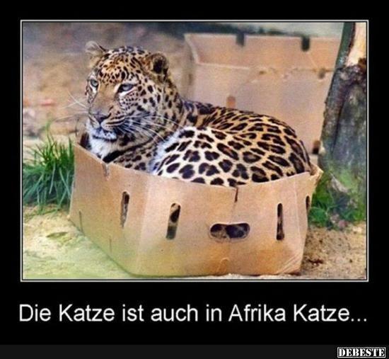 Die Katze ist auch in Afrika Katze.. | Lustige Bilder, Sprüche, Witze, echt lustig