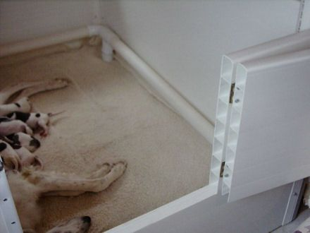 How To Make Nice Puppy Breeding Rooms Google Search