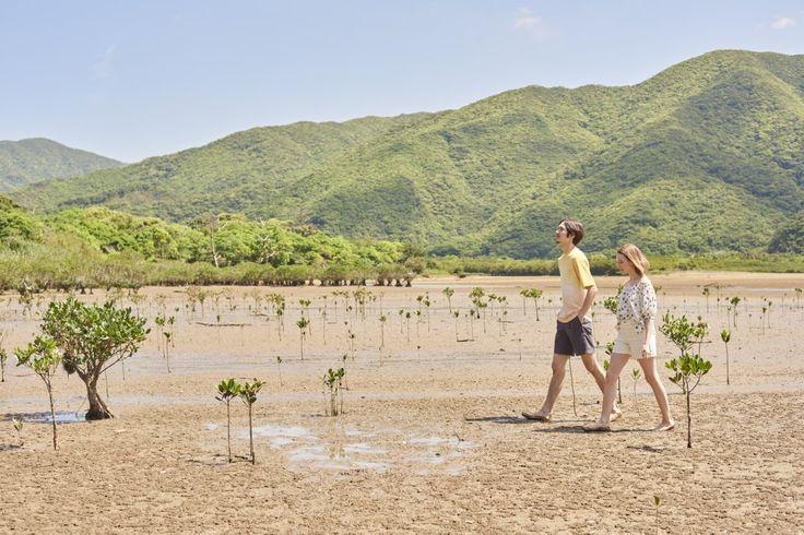 生き物たちの楽園、引き潮のマングローブ林を散歩。住用川と役勝川が合流する河口のデルタ地帯に広がるマングローブ原生林は、珍しい植物や多彩な生物が息づく、特別保護地区に指定された自然の宝庫。引き潮時には裸足で歩いて泥の感触を楽しみたい。ミネラル豊富な泥はパックにも最適、肌がすべすべに!満潮時にはカヌーツーリング体験がおすすめ。 #J'aDoRe JUN ONLINE #J'aDoRe Magazine #奄美大島 #大人の週末旅  #住用村マングローブ国定公園特別保護地区 #黒潮の森マングローブパーク