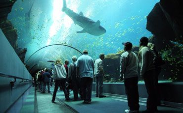 Underwater at Georgia Aquarium I would be in heaven!!!