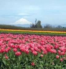Willamette Valley | Travel Oregon