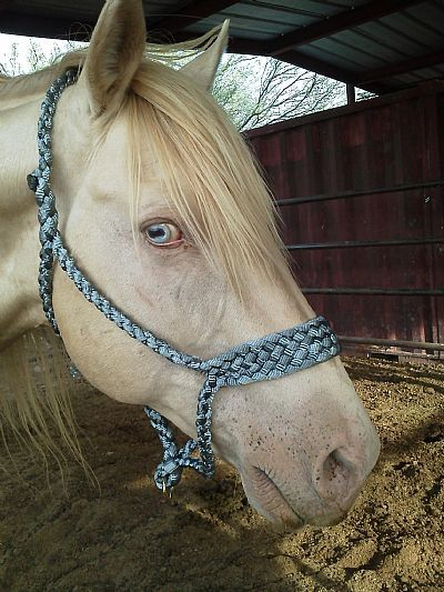 braid halter with mule tape | Cutting - Reining - Ranch Horses at Working Horse World, Horses for ...