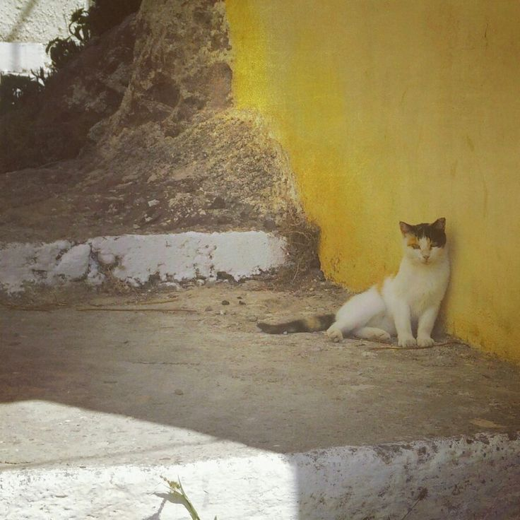 A cat relaxing in the shade in the streets of Sigri (Lesvos, Greece)