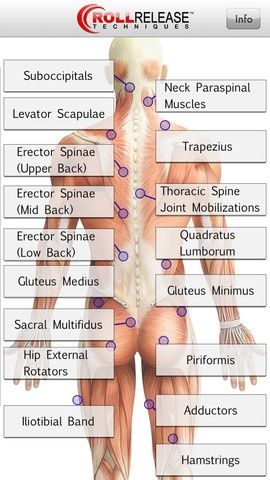 31 best {-Anatomy-} images on Pinterest   Physical therapy, Yoga ...
